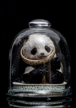 Mimi Berlin, 2013. History of Circus Legends. Panda. (1950s etched glass, cardboard, fur, band-aid, 1920s etched resin & rhinestones.) ø13 x 15 cm CommentReblog Aperture f/8 Camera Canon EOS 5D Mark III Focal Length 100mm Shutter Speed 1/167s View full size 997×1417